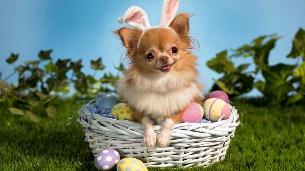 BaDoGood плохая-хорошая собака - Портал Easter10