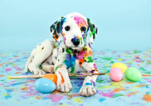BaDoGood плохая-хорошая собака - Портал Easter11