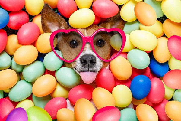 BaDoGood плохая-хорошая собака - Портал Holida10