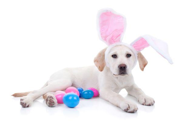 BaDoGood плохая-хорошая собака - Портал S5615410