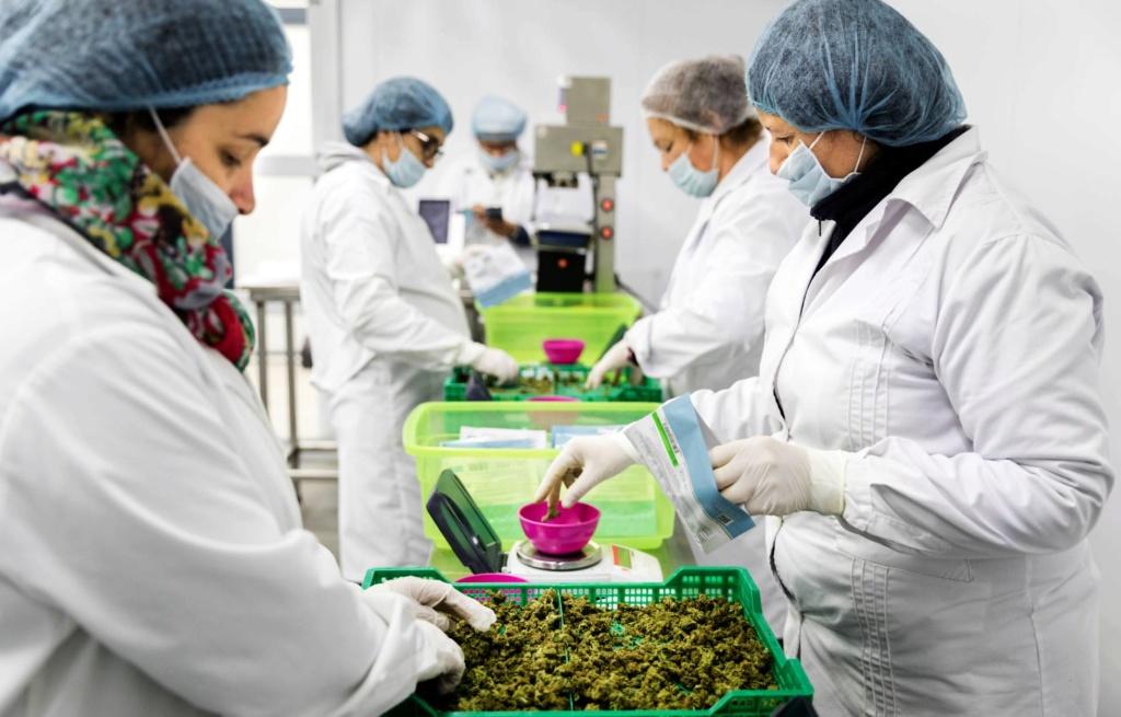 Libre comercio, sus repercusiones en el tráfico de drogas. - Página 6 15394410