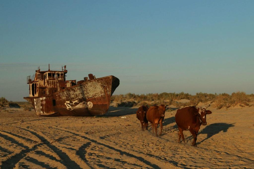 Mar de Aral reducido al 10% de la superficie anterior. 15524812