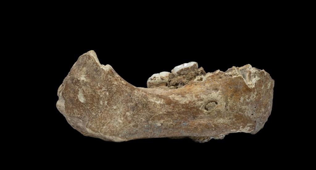Por primera vez, reconstruyen el epigenoma de neandertales y denisovanos, con los que estamos emparentados, y lo han comparado con el nuestro. [Historia] 15566410