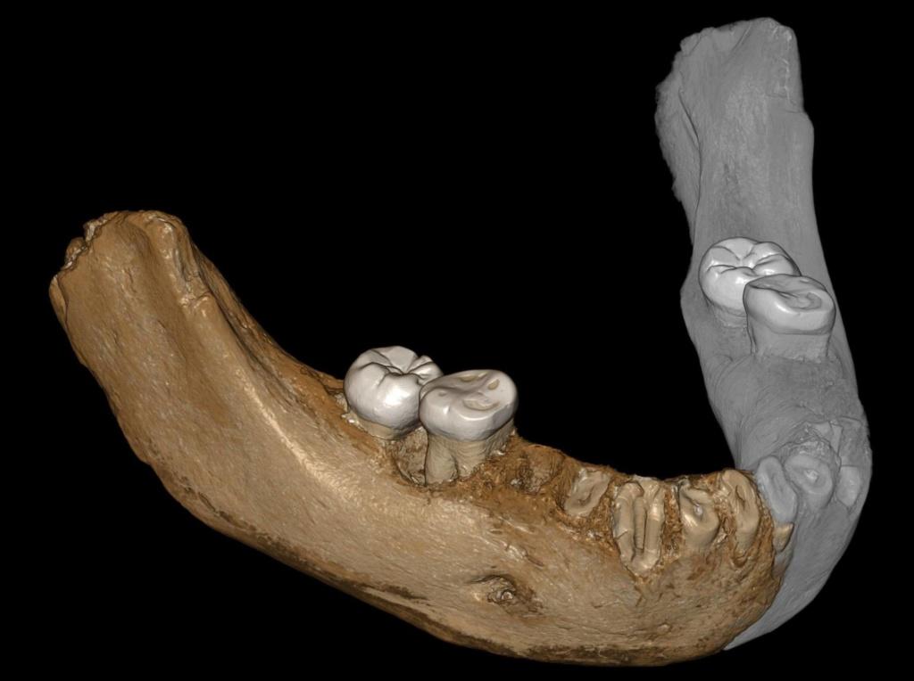 Por primera vez, reconstruyen el epigenoma de neandertales y denisovanos, con los que estamos emparentados, y lo han comparado con el nuestro. [Historia] 15568910