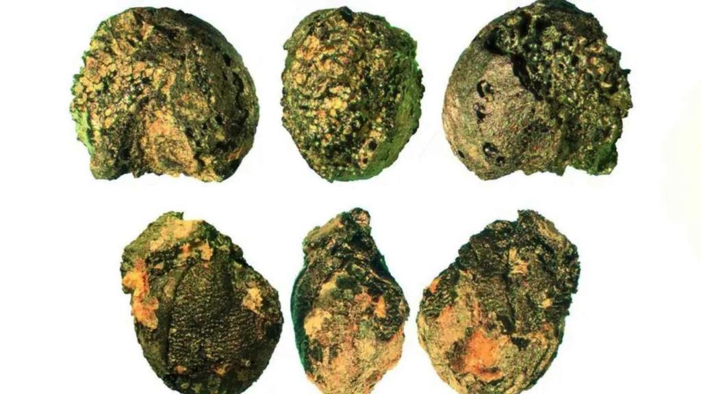 Trabajadores en una mina de cobre de la Edad de Bronce en los Alpes orientales llevaban la comida preparada. [Historia] 56870310