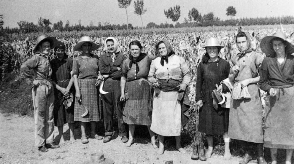 Mondine, obreras en los arrozales del Piamonte (Italia).[HistoriaC] Arroce10