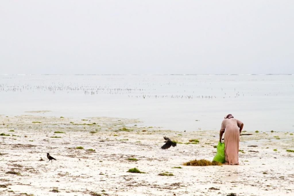 Granjeras de algas en el Índico (Zanzíbar [Tanzania]) Granje10