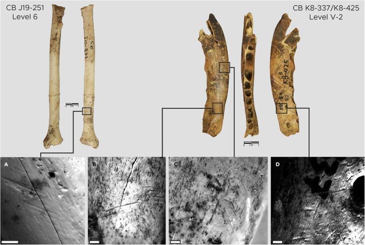 Hallan herramientas de hueso para elaborar ropa de hace 120.000 años. [Historia] Iscien10
