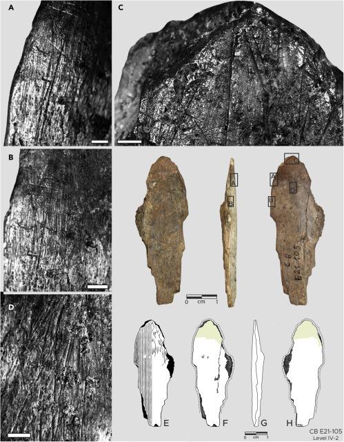 Hallan herramientas de hueso para elaborar ropa de hace 120.000 años. [Historia] Iscien11