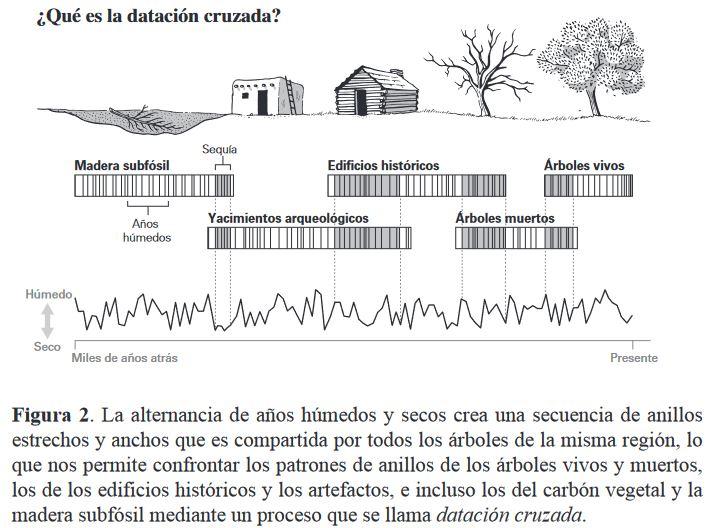 """""""Hay un mensaje de advertencia sobre nuestro futuro dentro de los árboles"""". (Valery Trouet autora del libro """"Escrito en los árboles"""") [Dendrocronología, paleoclimatología] Zarbol11"""