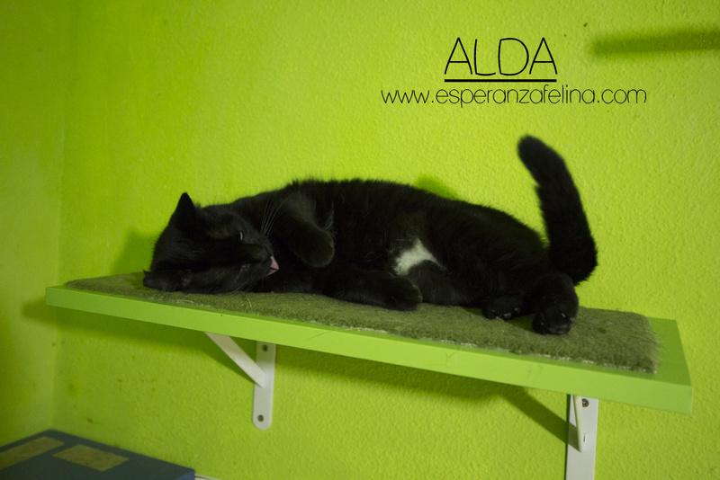 Alda, en busca de hogar ( Álava) ( F.N.aprox:12/15) 28ciwp10