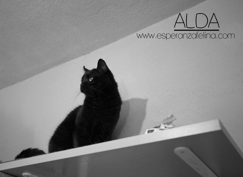 Alda, en busca de hogar ( Álava) ( F.N.aprox:12/15) 2ypajr10