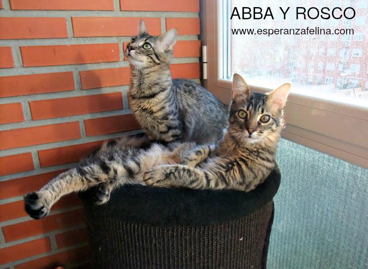 Abba y Rosco, hermanos peluchones en adopción (Fecha nac aprox: 09/16) ¡ADOPTADOS! Abba_y10