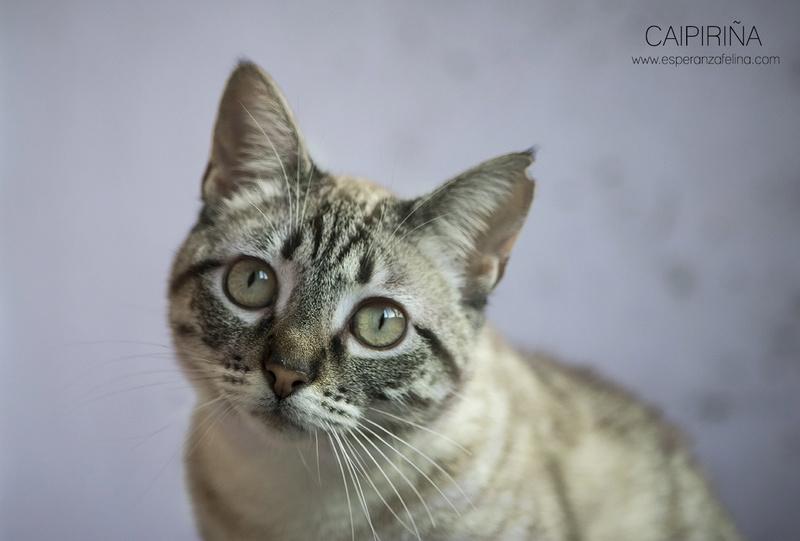 Caipiriña, preciosa peludina busca hogar, Alava (FN:12/05/16) ¡Adoptada! Caipi_13