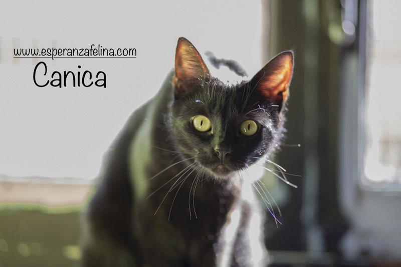 Micky y Canica, dos amores en adopción. (FN.Abril 2015) Álava Canica10