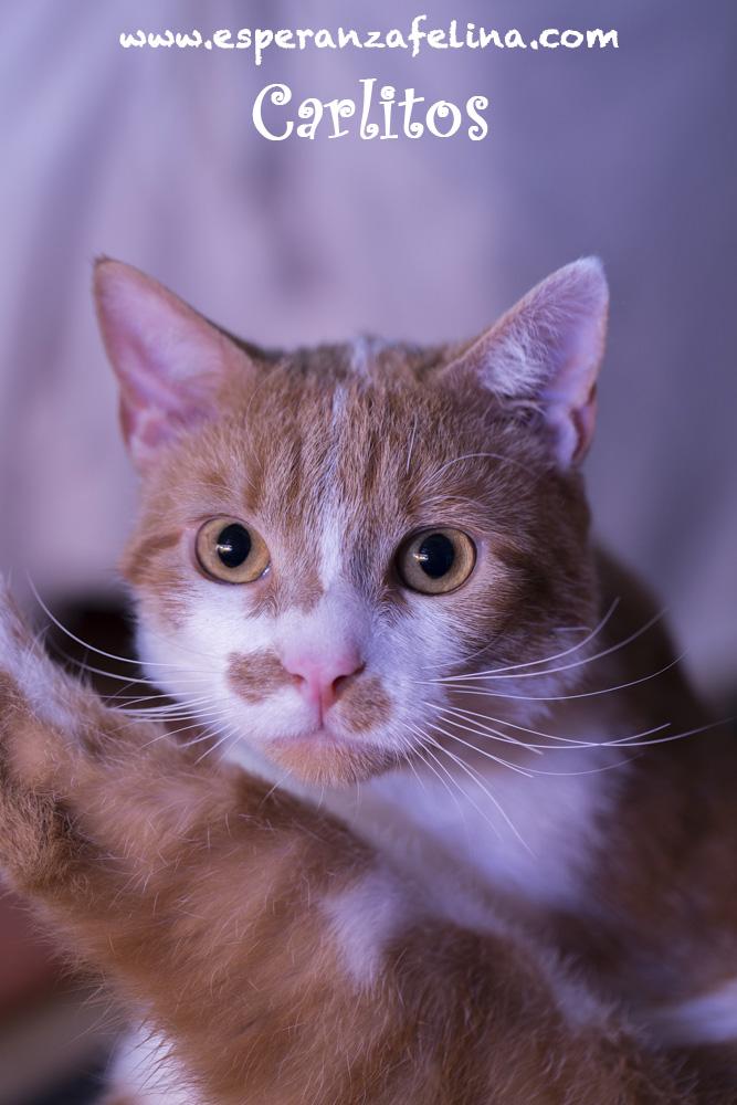 CARLITOS, en busca de hogar ( Álava) ( F.N.aprox:5/16)  ¡Adoptado! Carlit10