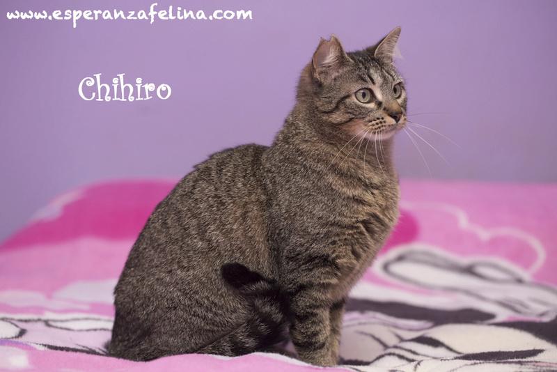 CHIHIRO, en busca de hogar ( Álava) ( F.N.aprox:1/15)  Chihir10