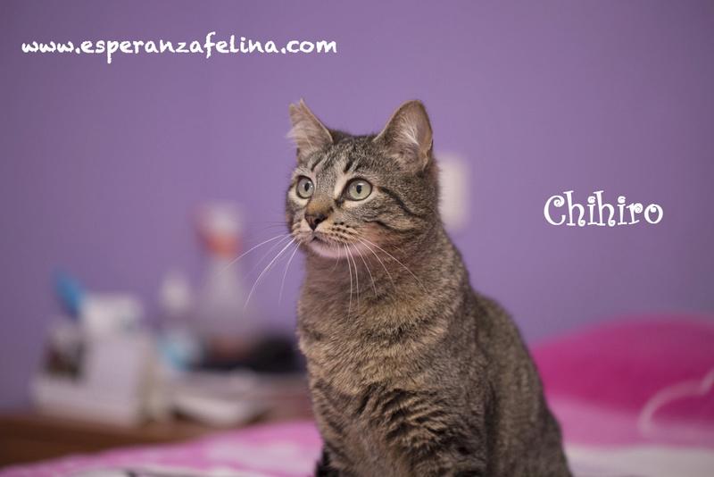 CHIHIRO, en busca de hogar ( Álava) ( F.N.aprox:1/15)  Chihir12