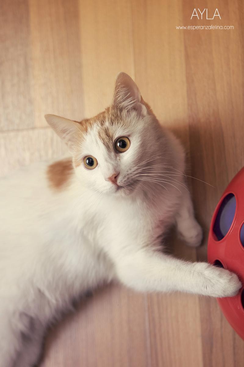 Ayla, preciosa gatita busca hogar. Alava. (FN:14/06/16) ¡Adoptada! Feo7bo10