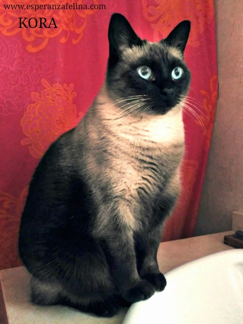Kora, gata siamesa busca hogar, Álava (Fecha aprox. nacimiento 5/11) - Página 2 Kora10