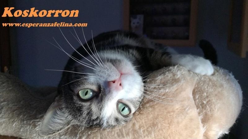 Koskorron, peluche en adopción +INMUNO ( Alava) ( F.N.aprox. 01/15) Koskor11