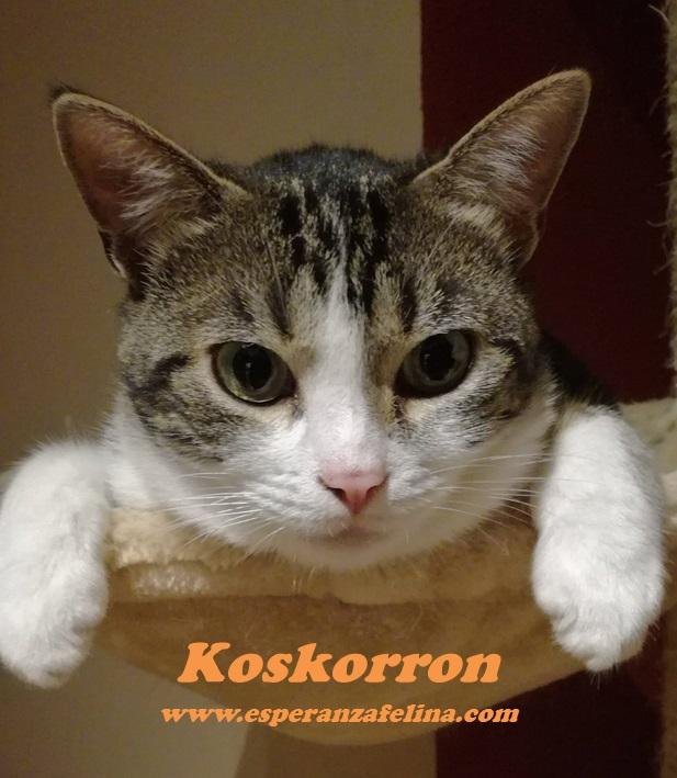 Koskorron, peluche en adopción +INMUNO ( Alava) ( F.N.aprox. 01/15) Koskor12