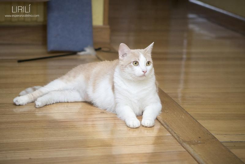 Lirilí, preciosa blanquita con ganas de que la mimen (Álava F.N.aprox: 07-09-15 ) ¡Adoptada! Lirili11