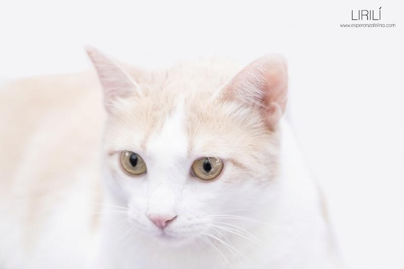 Lirilí, preciosa blanquita con ganas de que la mimen (Álava F.N.aprox: 07-09-15 ) ¡Adoptada! Lirili12