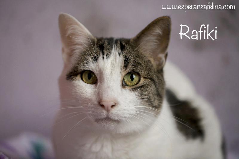 Simba y Rafiki, pareja muy especial en adopción. Alava (FN:15/09/15 ; 15/09/09) Rafiki11