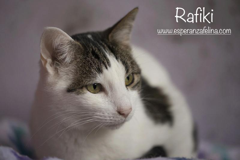 Simba y Rafiki, pareja muy especial en adopción. Alava (FN:15/09/15 ; 15/09/09) Rafiki12