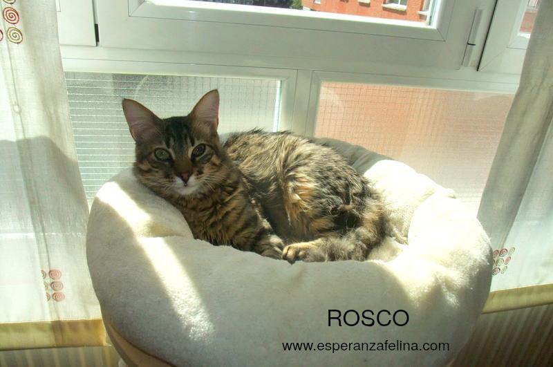 Abba y Rosco, hermanos peluchones en adopción (Fecha nac aprox: 09/16) ¡ADOPTADOS! Rosco10