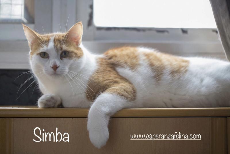 Simba y Rafiki, pareja muy especial en adopción. Alava (FN:15/09/15 ; 15/09/09) Simba210