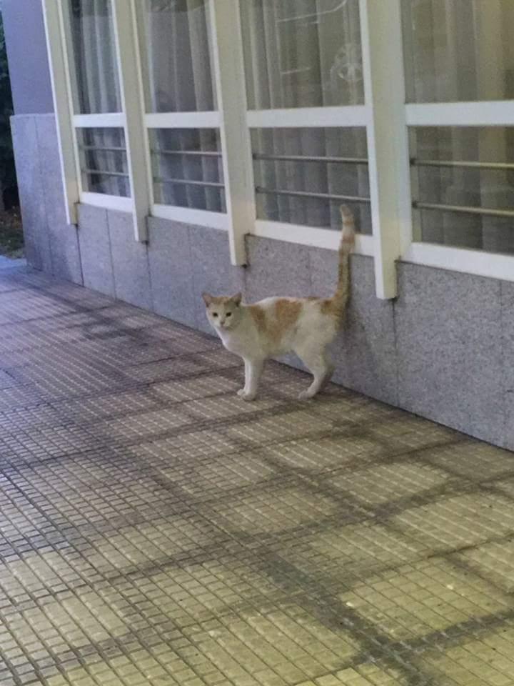 Gato casero en Servigal Fb_img11