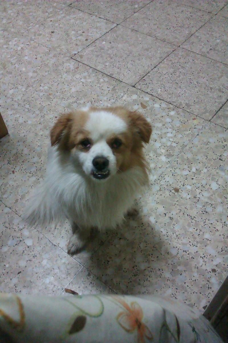 Perro perdido en Churio/ Irixoa Imag0110