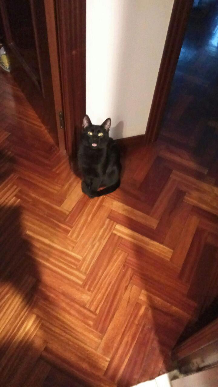 Gato negro perdido calle Barcelona Image-10