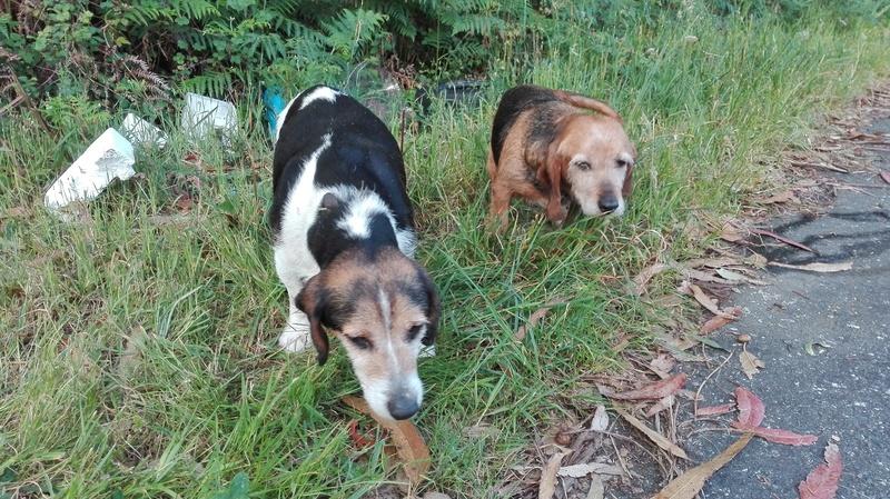 Perros que aparecieron perdidos Img_2028