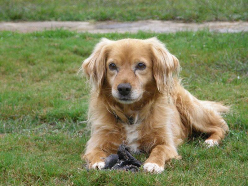 Perro perdido en Vilarmaior  P9100010