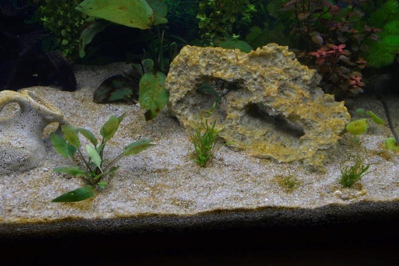 Un dépot marron dans tout l'aquarium...de 8 jours. _dsc3830