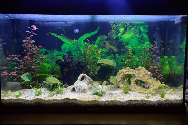 Un dépot marron dans tout l'aquarium...de 8 jours. _dsc3832