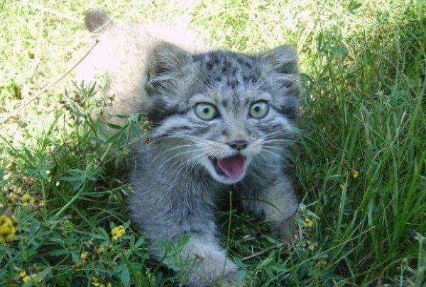 Клуб любителей кошек. - Страница 5 14894211