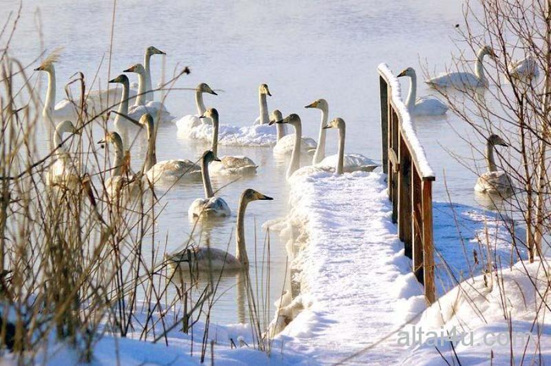 Первый в Москве парк водоплавающих птиц создадут на севере города Nnjjjj11