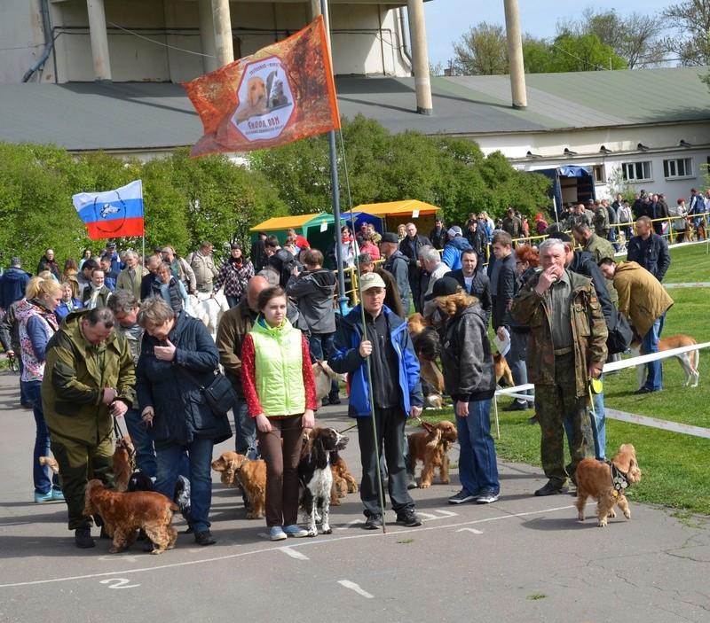 101-ая Ленинградская областная выставка собак охотничьих пород _dsc2110