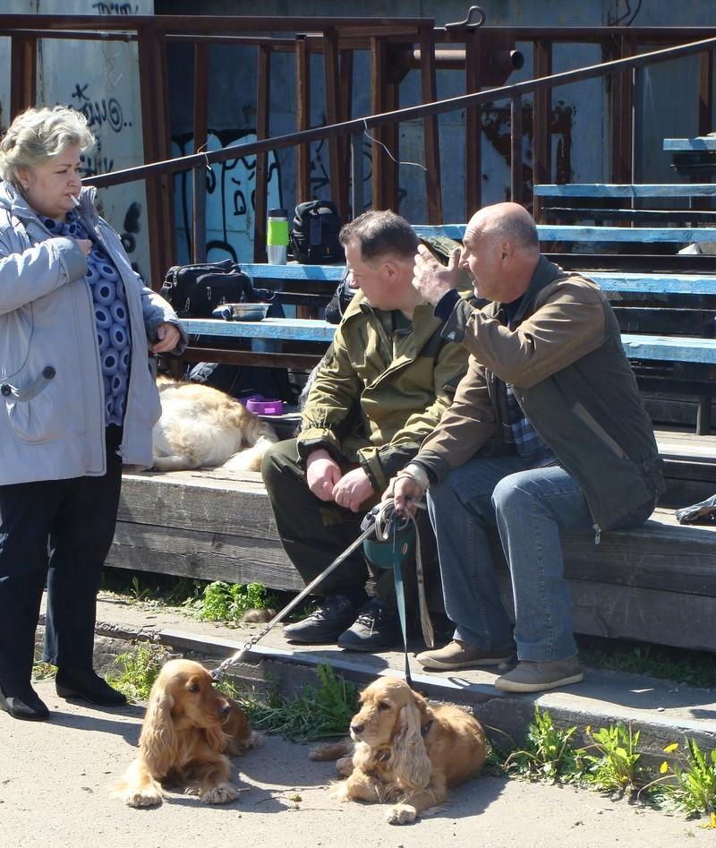 101-ая Ленинградская областная выставка собак охотничьих пород Dsc00314