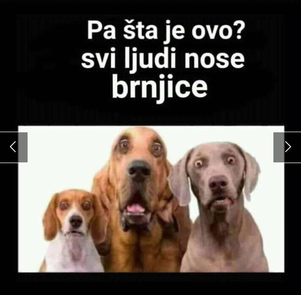ŠALJIVE SLIKE Brnjic10
