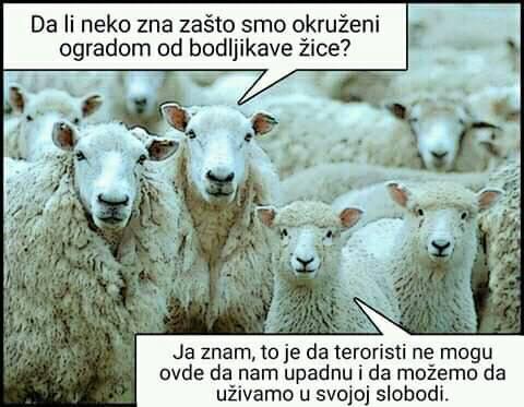 MANIPULACIJE-ISPIRANJE MOZGOVA-PROPAGANDA MEDIJA - Page 2 Ovce19