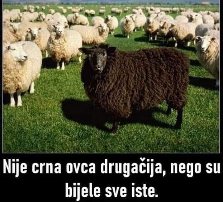 """MEDIJSKE MANIPULACIJE-KORONA KOVID """"VIRUS""""! - Page 5 Ovce23"""