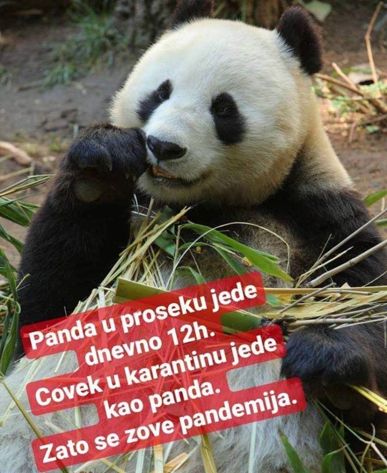 "MEDIJSKE MANIPULACIJE-KORONA KOVID ""VIRUS""! Panda10"