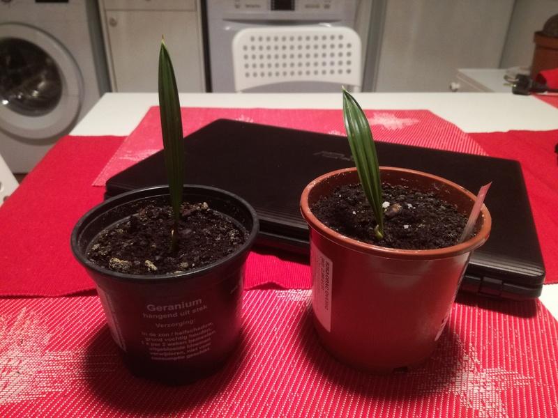 Pěstování ze semínka - Stránka 2 Img_2011