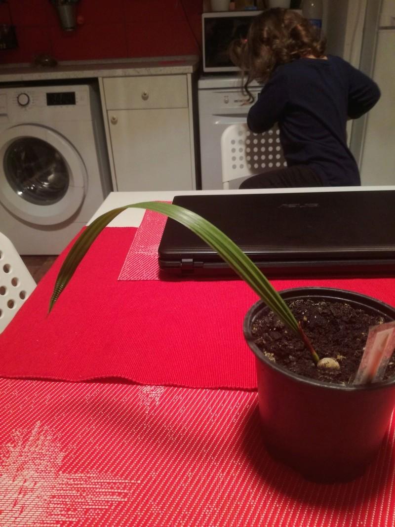 Pěstování ze semínka - Stránka 2 Img_2012