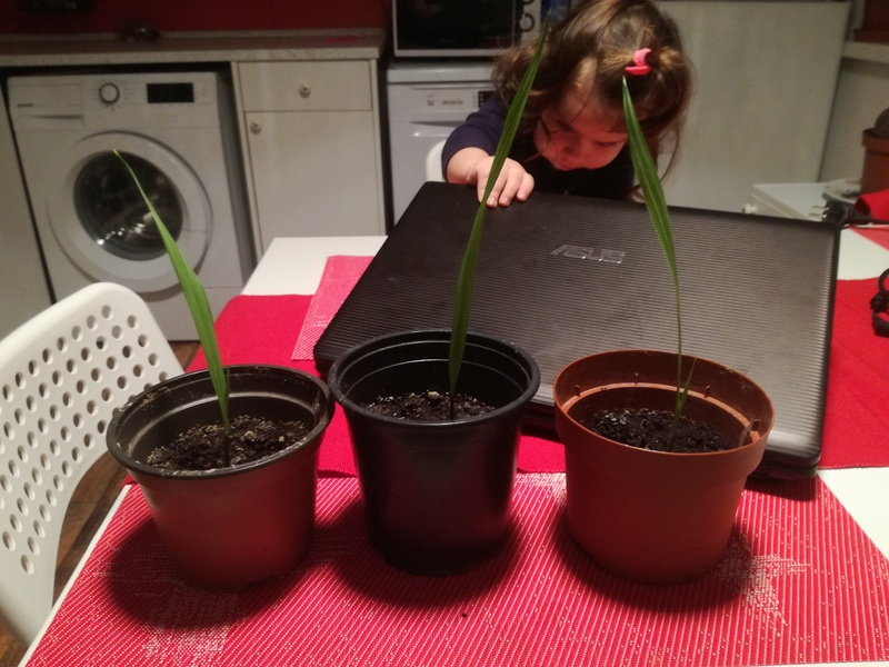 Pěstování ze semínka - Stránka 2 Img_2013
